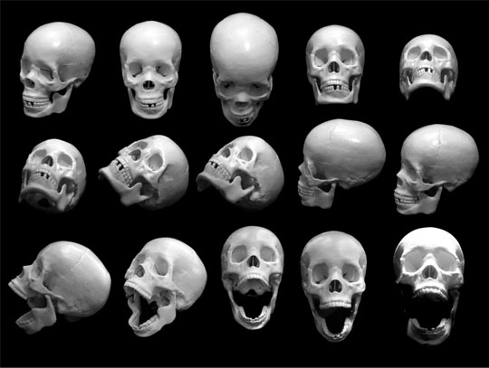 free-skull-photos-preview.jpg