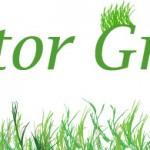 Create a Grassy Field in Illustrator in 13 Simple Steps