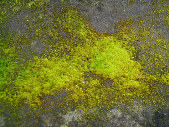 stock_texture___moss_on_stone_ii_by_rockgem-d72f3xy