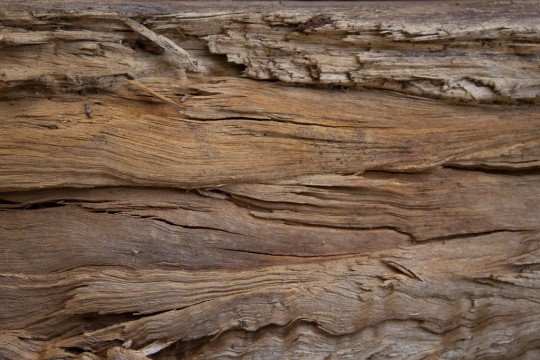 wood_3_by_photoshop_stock-d49o9ht