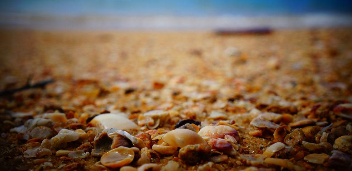 beach_header