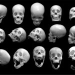 Free Exclusive resource from Jimiyo: Skull Reference Photos