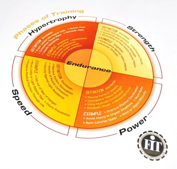 Phases of training infographic