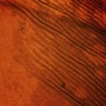 Microscopic Fingerprints Texture Pack - Go Media's Arsenal